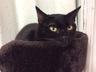 cat_sith