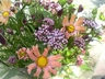 roserose_may