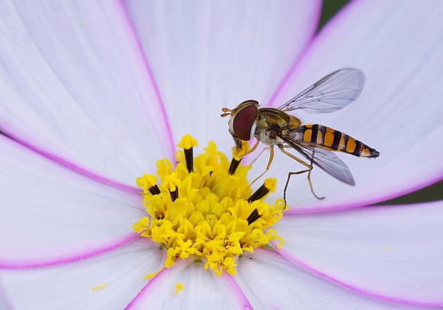 gensanno-flower1112
