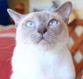 go_sanpo_cat