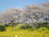 ooshima2515