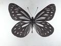 takekoma55