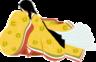suri-riba