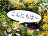 hanahasakuragi_001
