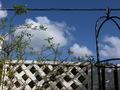 aozora-garden