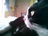 kittykitty-1230