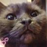 cat_cat22