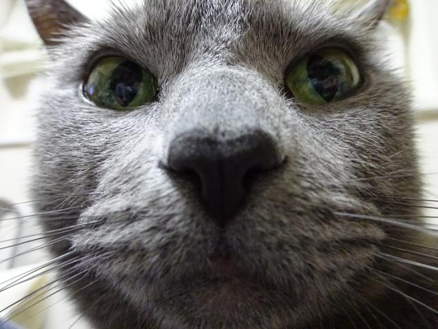 twocats3942