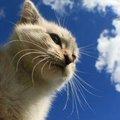 catnewsagency